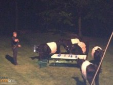 Krowy rujnuj� posiedzenie przy piwie