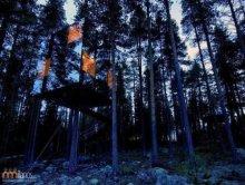 Oryginalne domki na drzewach