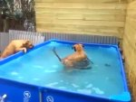 Praca zespo�owa buldog�w, czyli jak wyci�gn�� z basenu opon�