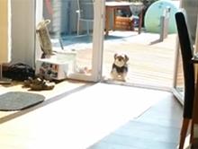 Pies my�li �e drzwi tarasowe s� zamkni�te