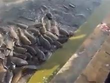 Wyg�odnia�e ryby z Indii