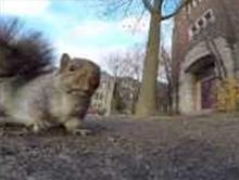 Wiewi�rka kradnie kamer�