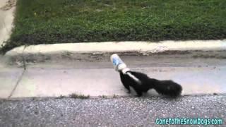 Na ratunek skunksowi