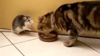 Troch� inny kot od innych