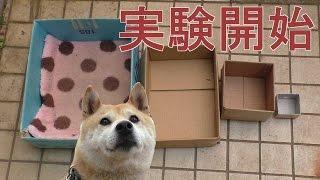Trolowanie psa