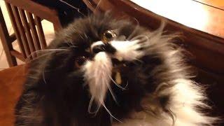 Reakcja kota na lody