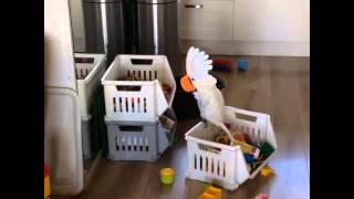 Papuga krzyczy do ...