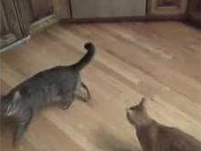 Jak oduczy� kota wskakiwania na meble