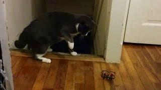 Kocia ciekawo�� kt�ra sama ich przestraszy�a