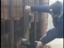 Idiota wkurza psy w klatkach