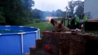 Dog steals firewo ...