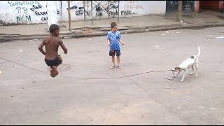 Dzieci graj� z psem w skakank�