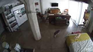 Kot poucza szczeniaka kto rz�dzi w domu
