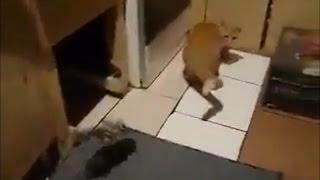 Szczur zaatakowa� ...