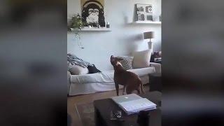 Pokaza� psu now� zabawk�