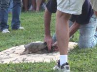Torturowanie żółwia