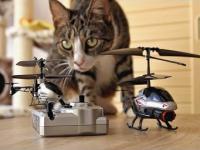 Koty kontra helikopter RC