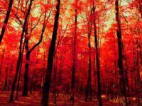 Czerwone krajobrazy