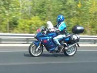 Pies na motorze