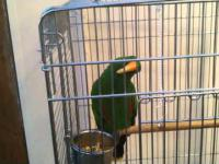 Gadająca papuga.