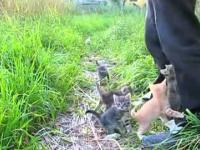 Najsłodsze kociaki na świecie