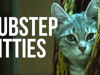 Walczące koty w spowolnionym tempie