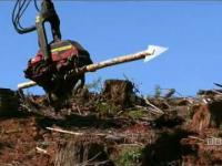Lumberjack gra Darta :D