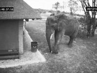 Porządny słoń
