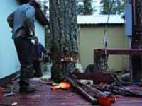 Scinanie drzewa - poziom master