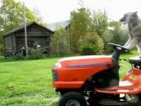 Nietypowy kosiarz trawy