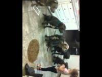 Karmienie posłusznych psów II