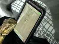 Jaszczurka gra na smartfonie..