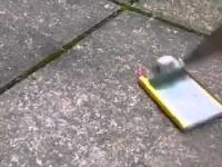 Zabawa z nożem i baterią z telefonu