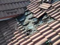 Plaga nietoperzy pod dachem
