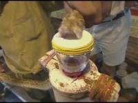 Kropla jadu węża w połączeniu z krwią