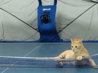 Kot ze specjalnymi umiejętnościami.