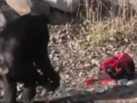 Szympans szykuje ognisko i rozpala je zapalniczką