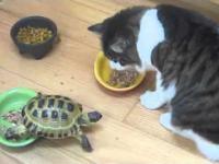 Żółw terroryzuje koty
