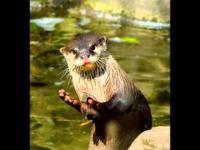 Najpiękniejsze zdjęcia zwierząt