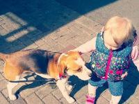 Dlaczego dzieci nie powinny wyprowadzać psa na smyczy!