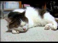 Kot czujący bluesa
