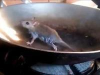 Mysz próbuje wydostać się z patelni