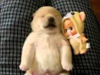 Śpiąca Puppy Dreaming