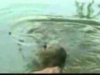 żółw zabójca II