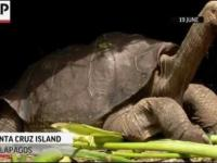 Ostatni żółw słoniowy