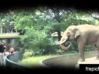Słoń który nie lubi zdjęć