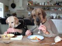 dwa psy w jadalni