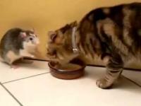 Trochę inny kot od innych