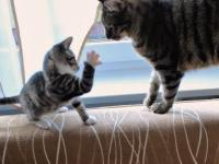 Młody kot kontra ogon