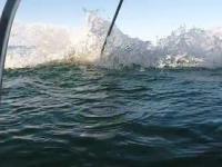 Żarłacz biały atakuje klatkę z nurkami